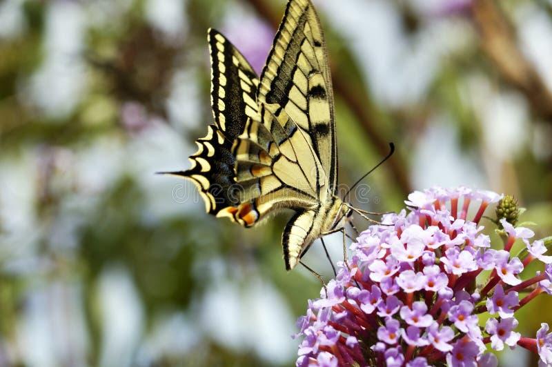 Mariposa imagenes de archivo