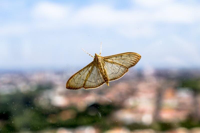 Mariposa fotos de stock