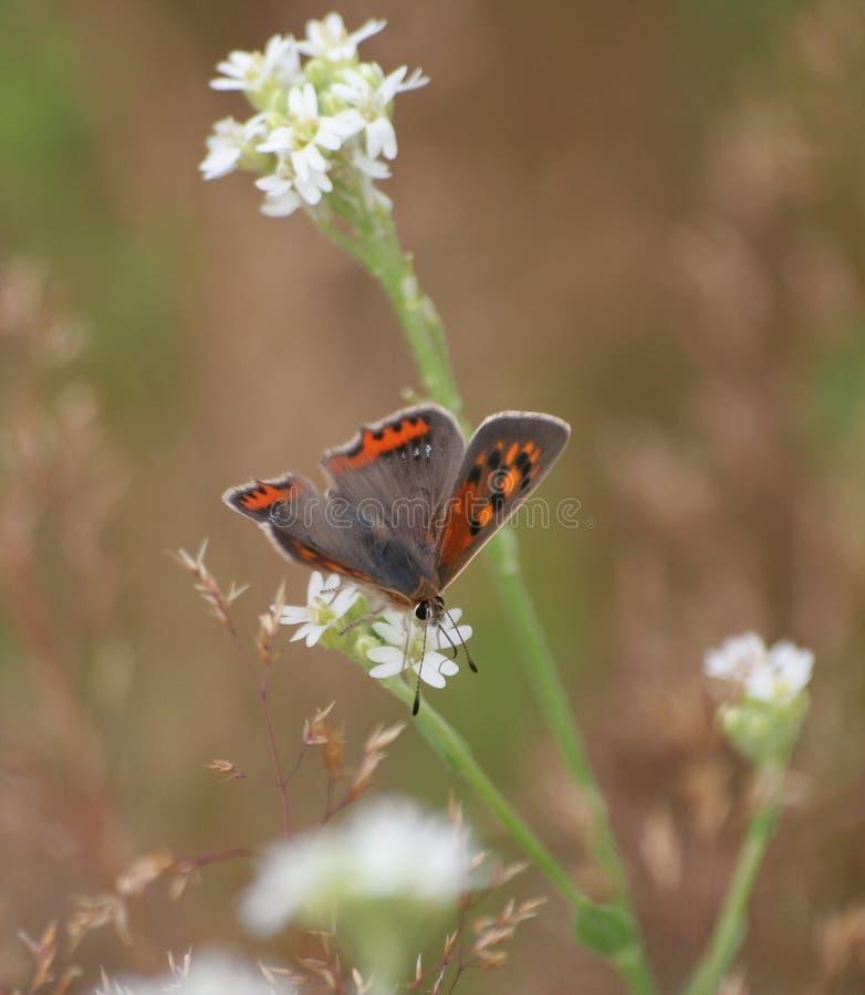 Mariposa #2 imagen de archivo libre de regalías