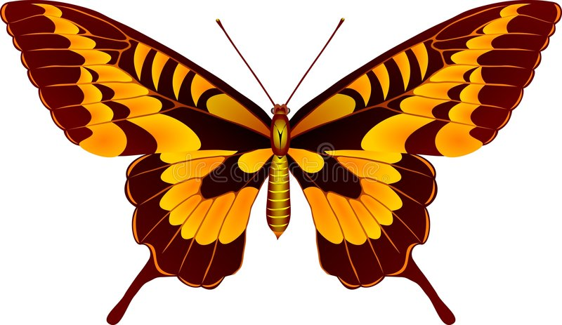 Mariposa libre illustration