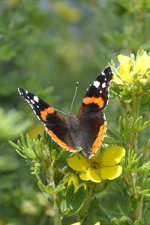 Mariposa 29 fotografía de archivo