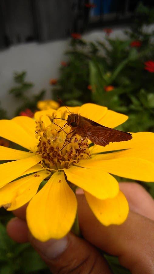 Mariposa photos stock
