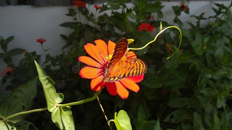 Mariposa images libres de droits