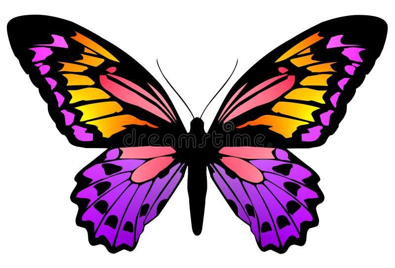 Mariposa 6 ilustración del vector