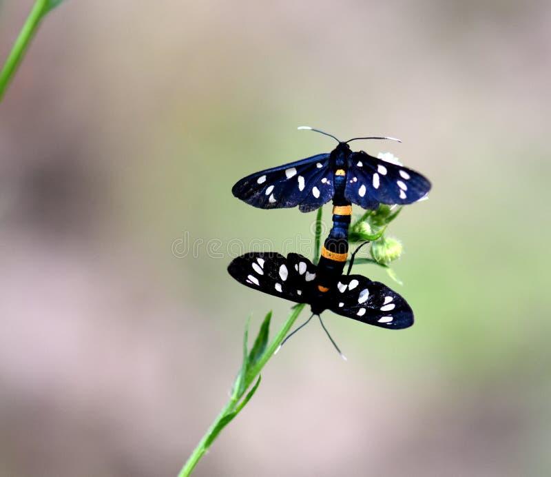 Mariposa agradable en la flor foto de archivo libre de regalías