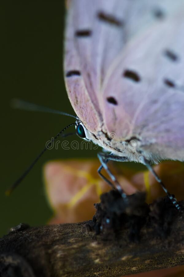 Mariposa alas vuelo royalty free stock photography