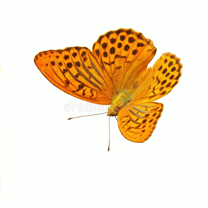 Mariposa amarilla imagenes de archivo