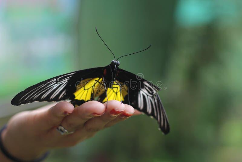 Mariposa amistosa imágenes de archivo libres de regalías