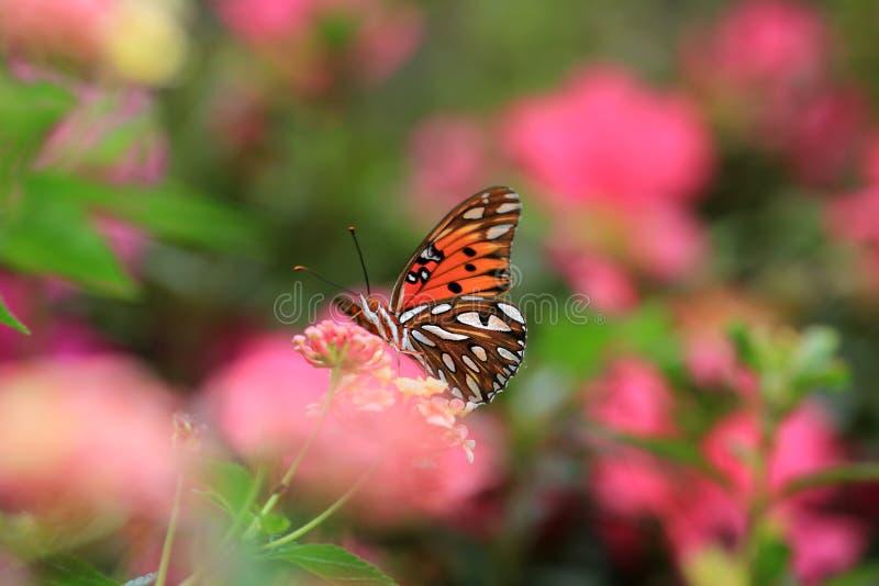 Mariposa anaranjada en un prado foto de archivo