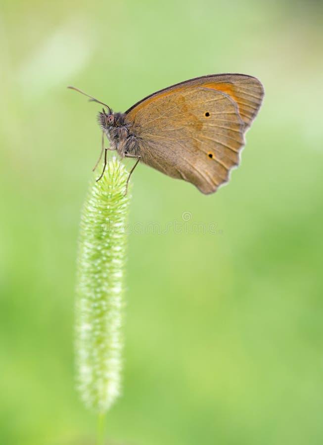 Mariposa anaranjada hermosa fotografía de archivo