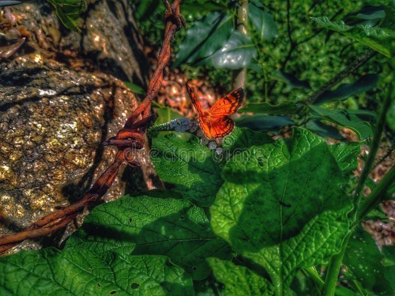 Mariposa anaranjada hermosa que toma el sol y que alimenta fotografía de archivo