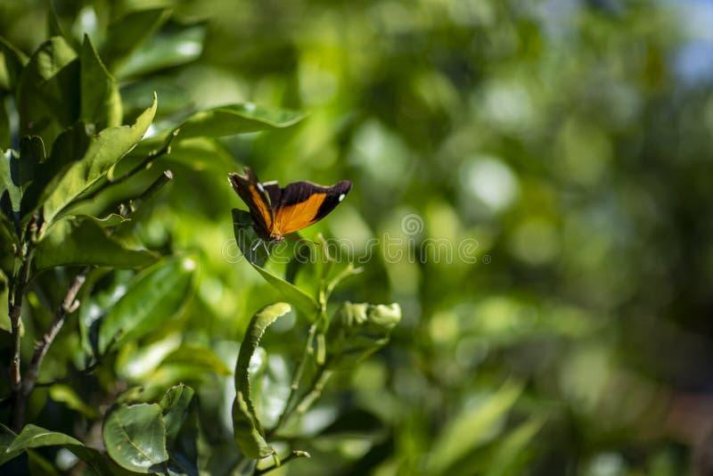 Mariposa anaranjada y negra imagen de archivo libre de regalías