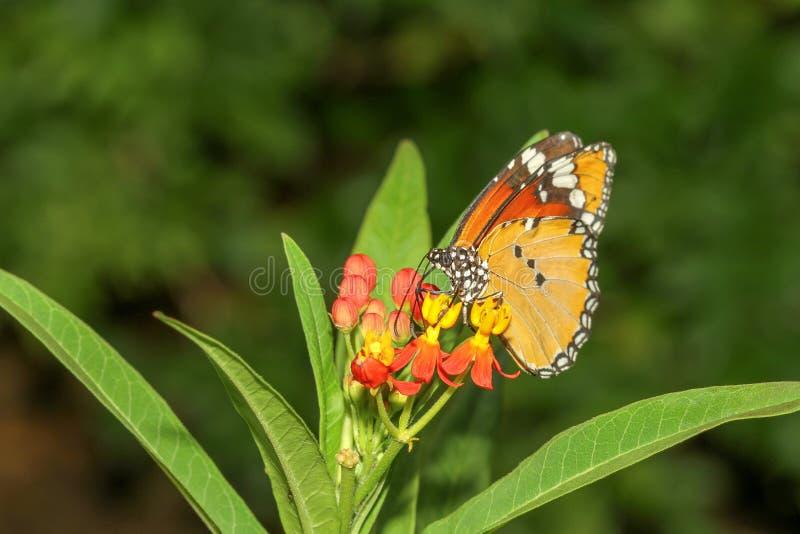 Mariposa ascendente cercana en naturaleza en el parque foto de archivo libre de regalías