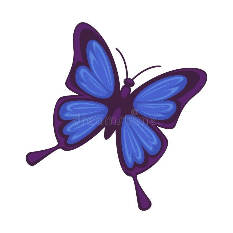 Mariposa Azul Aislada En El Fondo Blanco Rhetenor De Morpho ...