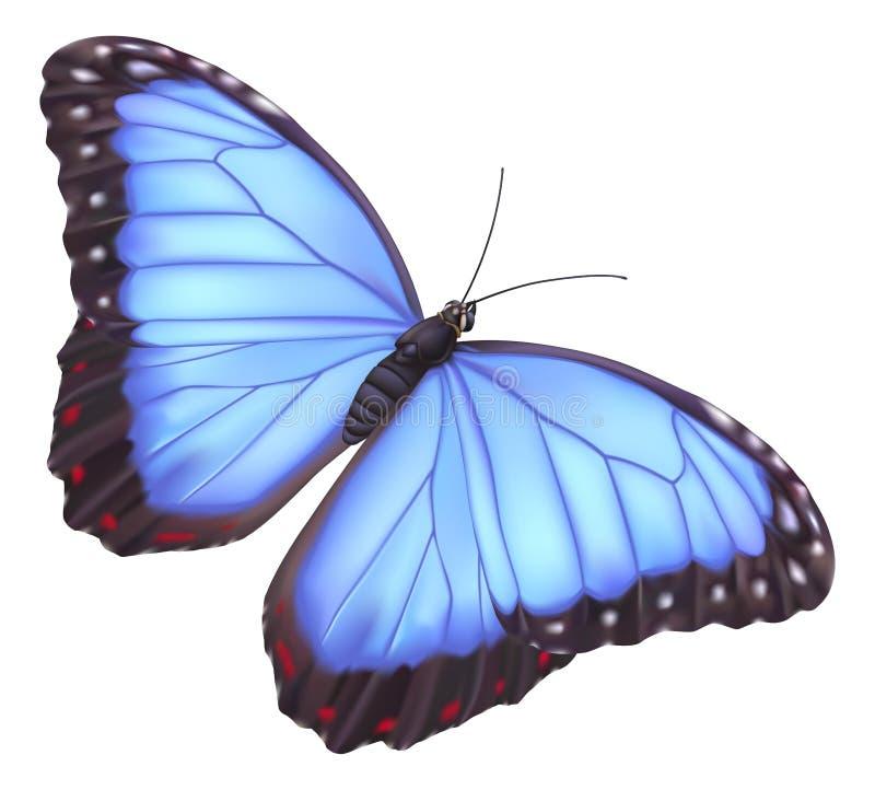 Mariposa azul del morpho ilustración del vector