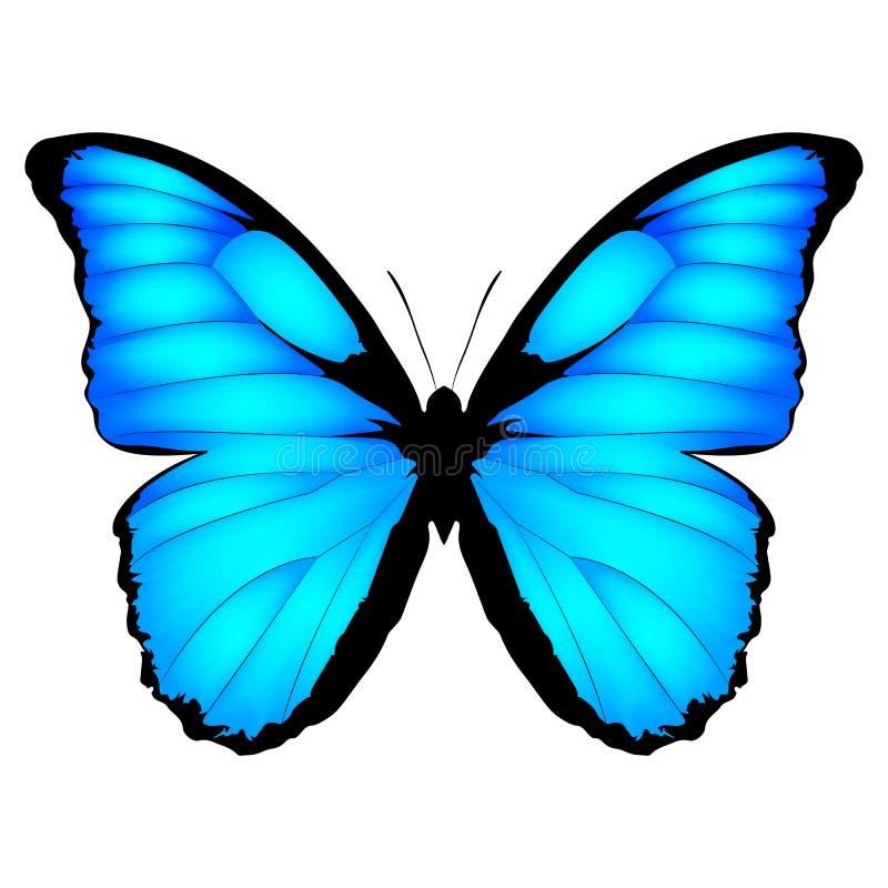 Mariposa azul Ejemplo del vector de la mariposa ex?tica aislado en el fondo blanco Menelaus de Morpho libre illustration