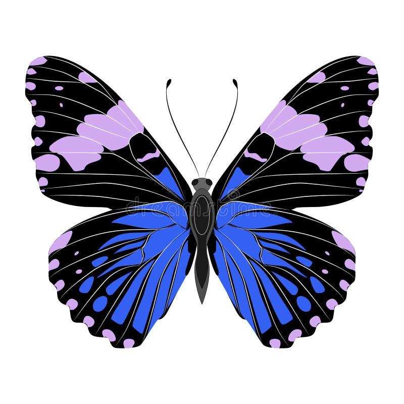 Mariposa azul hermosa brillante Ilustración del vector aislada libre illustration