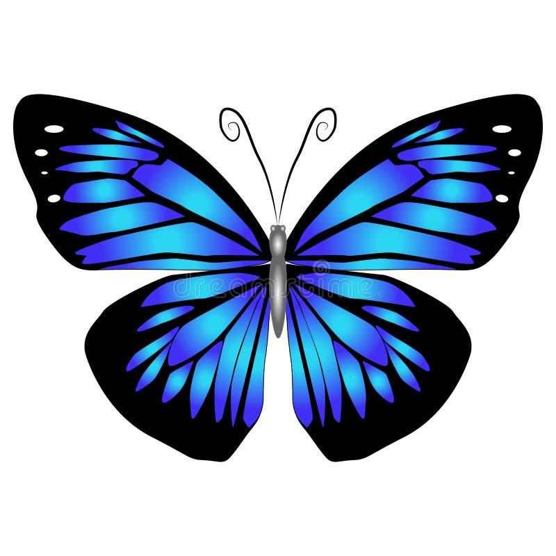 Mariposa azul hermosa brillante Ilustración del vector aislada imágenes de archivo libres de regalías