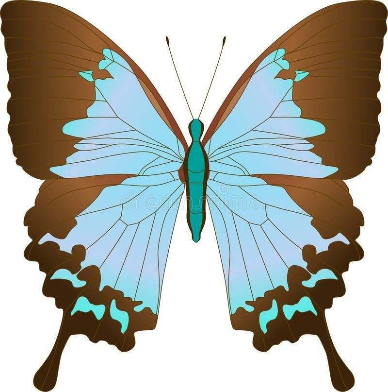 Mariposa azul Papilio Achillides Ulises de Ulises del velero Ilustración del vector stock de ilustración
