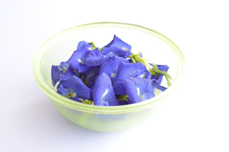 Mariposa azul Pea Flower en el fondo blanco fotos de archivo