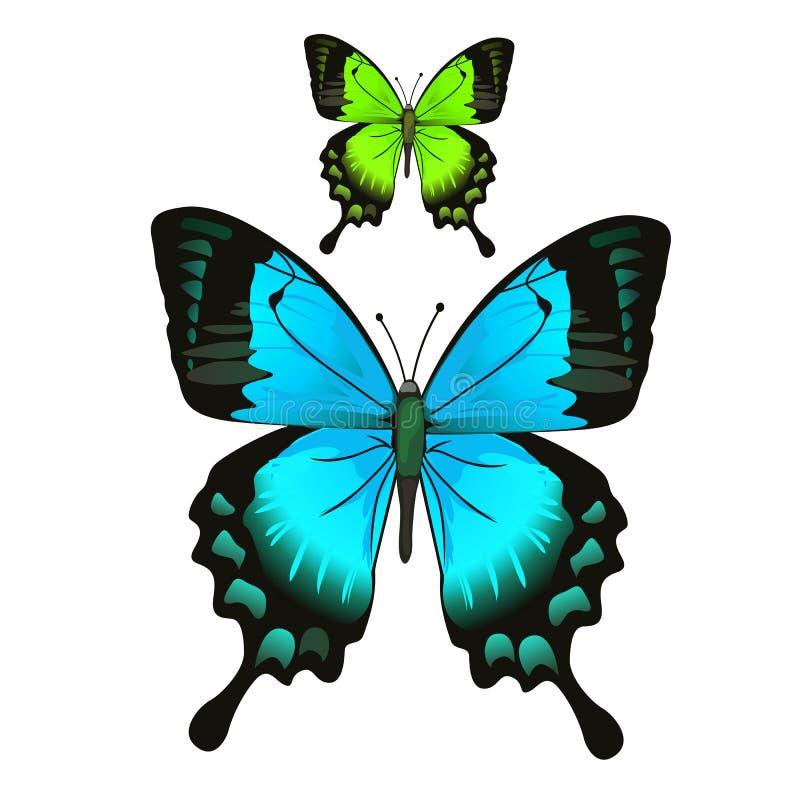 Mariposa azul y verde hermosa brillante stock de ilustración
