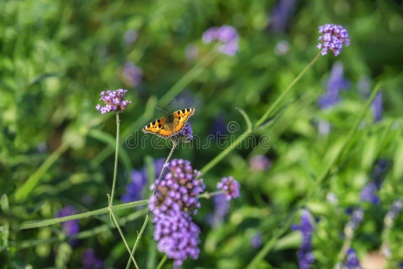Mariposa brillante y flores salvajes, prado en el verano, día soleado Fondo colorido pintoresco foto de archivo