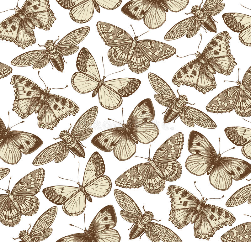 Mariposa, cigarra e insecto hermosos Ejemplos animales antiguos fauna Grabado del dibujo Modelo del fondo Vector del vintage ilustración del vector