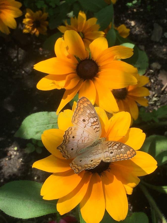 Mariposa colorida fotos de archivo