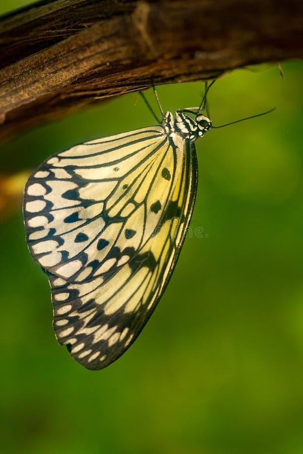 Mariposa colorida contra las hojas verdes fotos de archivo libres de regalías