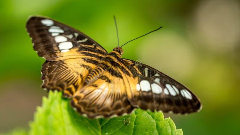 Mariposa colorida contra las hojas verdes imágenes de archivo libres de regalías