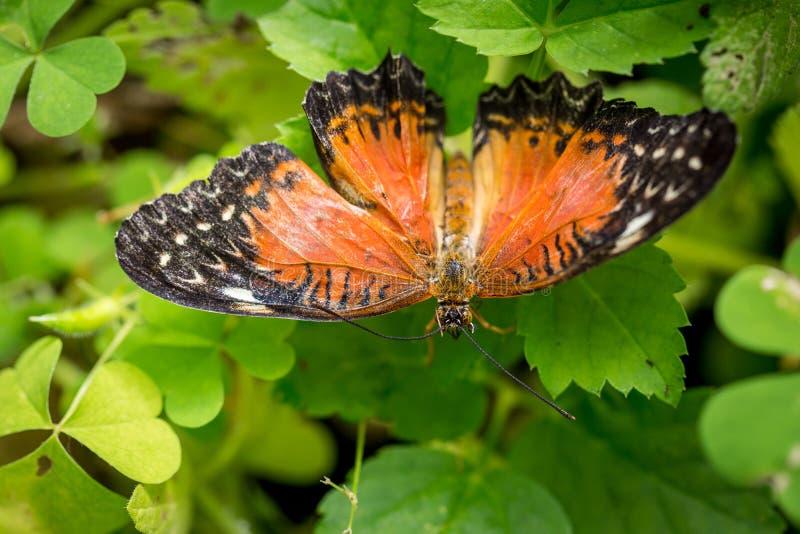 Mariposa colorida contra las hojas verdes fotografía de archivo