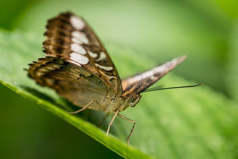 Mariposa colorida contra las hojas verdes foto de archivo