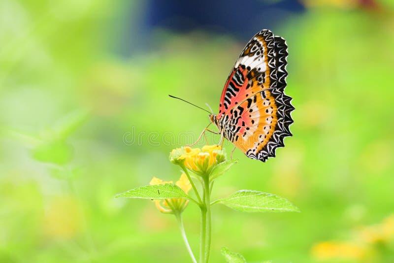 Mariposa colorida en la flor imágenes de archivo libres de regalías