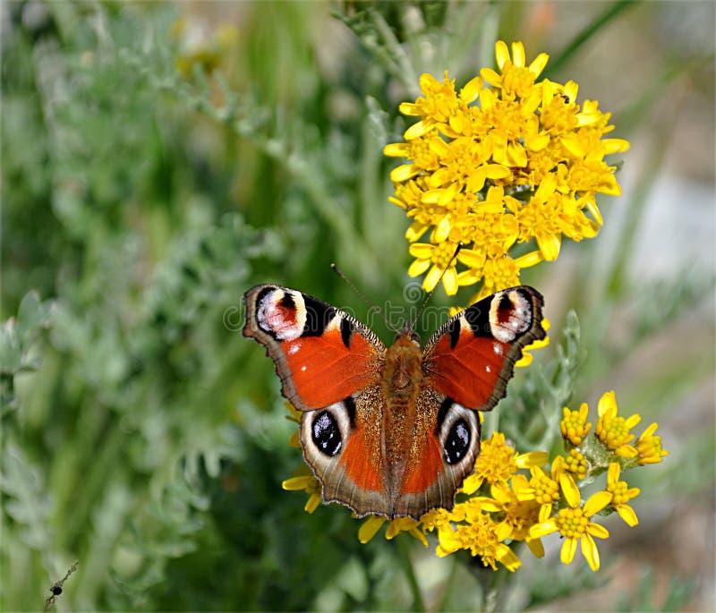 Mariposa colorida en las plantas florecientes imagen de archivo libre de regalías