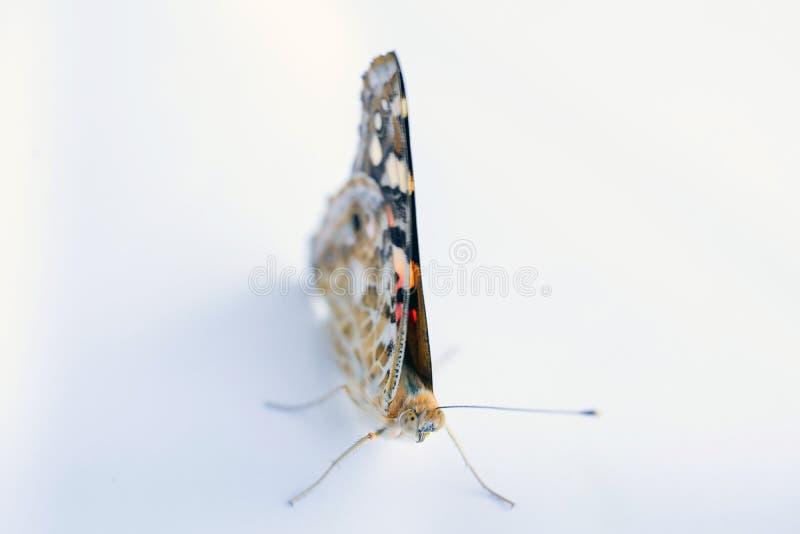 Mariposa colorida en un fondo blanco Copie los espacios imágenes de archivo libres de regalías
