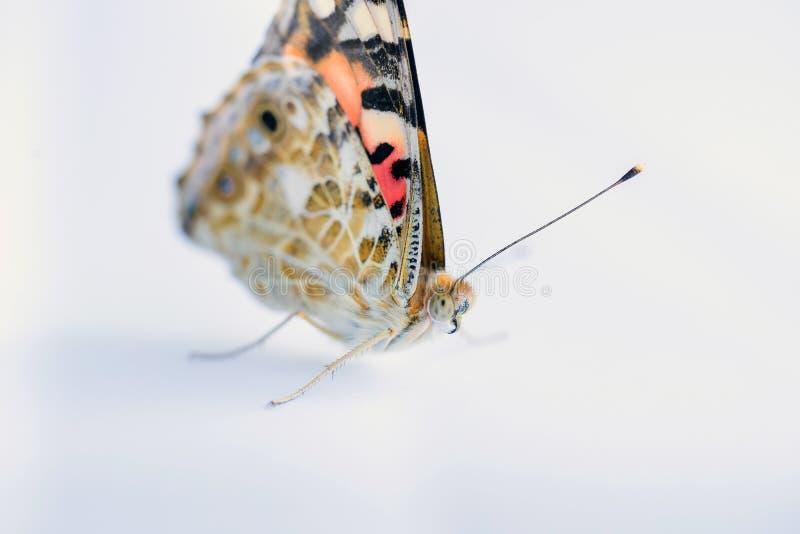 Mariposa colorida en un fondo blanco Copie los espacios fotos de archivo