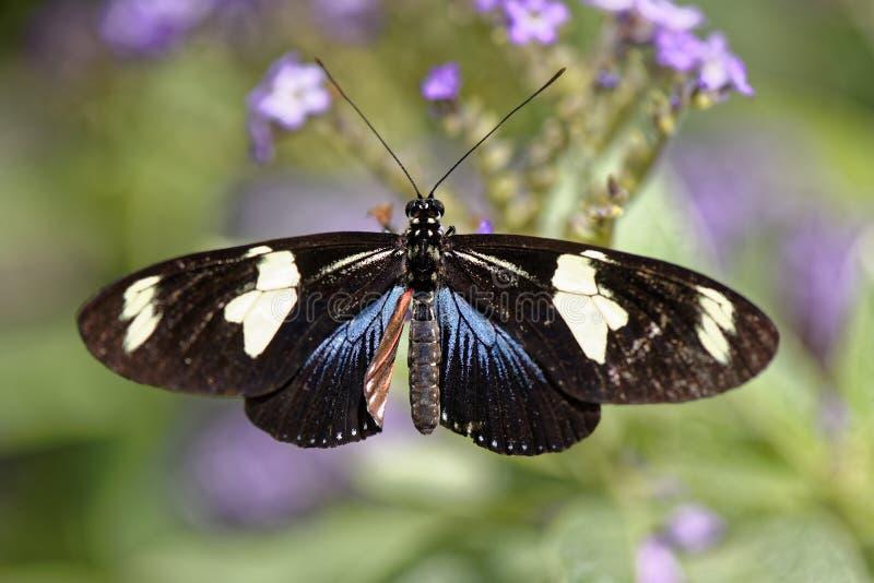 Mariposa colorida en una flor fotografía de archivo