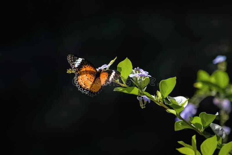 Mariposa colorida que cuelga en las flores imagenes de archivo