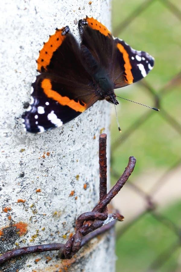 mariposa con antenas se sienta cerca del cable fotografía de archivo libre de regalías