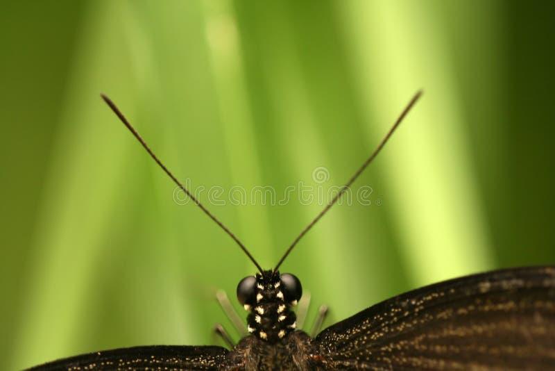 Mariposa con las antenas imagen de archivo