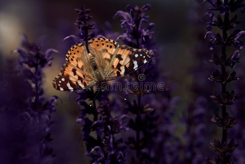 Mariposa de ensueño fotografía de archivo