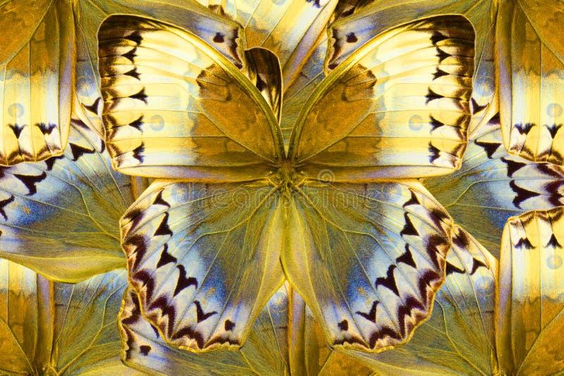 Mariposa de Junglequeen del camboyano (howqua de Stichophthalma) fotografía de archivo libre de regalías