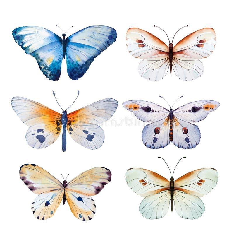 Mariposa de la acuarela El verano del vintage aisló el ejemplo para su invitación de boda del diseño, insecto, belleza del arte d ilustración del vector