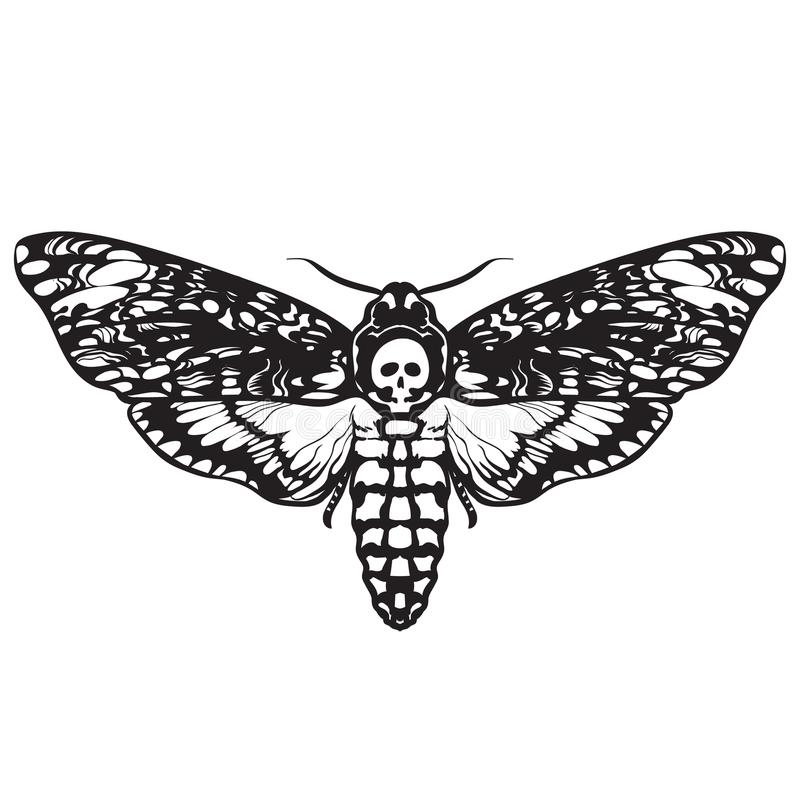 Mariposa de la polilla del cráneo Polilla de halcón de la cabeza de muerte stock de ilustración