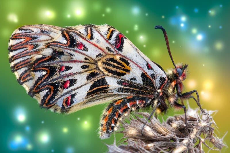 Mariposa de la primavera en una flor vieja foto de archivo libre de regalías