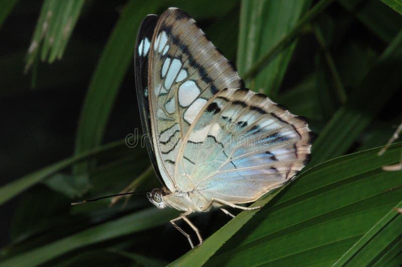 Download Mariposa de las podadoras imagen de archivo. Imagen de marrón - 7280139