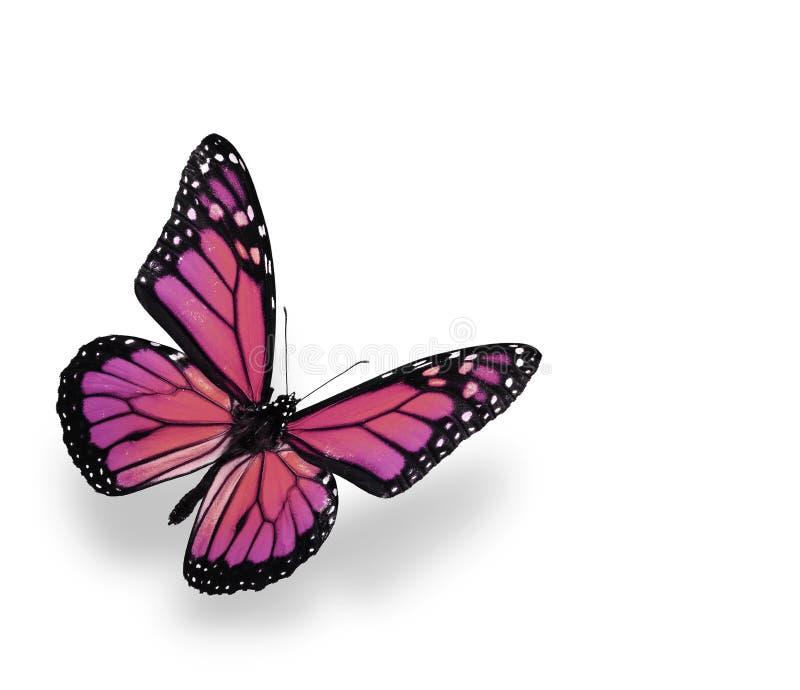 Mariposa de monarca aislada en blanco foto de archivo