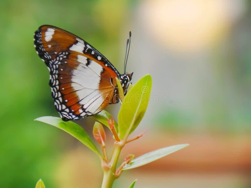 Mariposa de monarca en el jardín imagenes de archivo