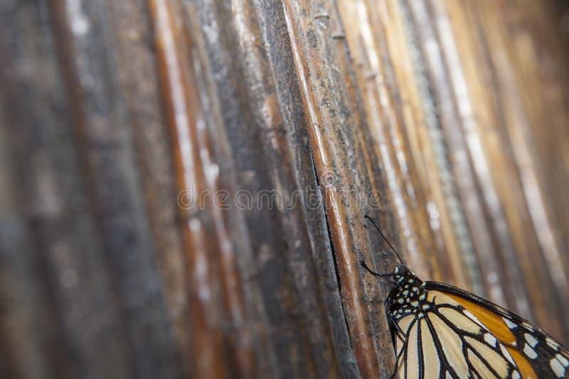 Mariposa de monarca sobre fondo de mimbre fotos de archivo