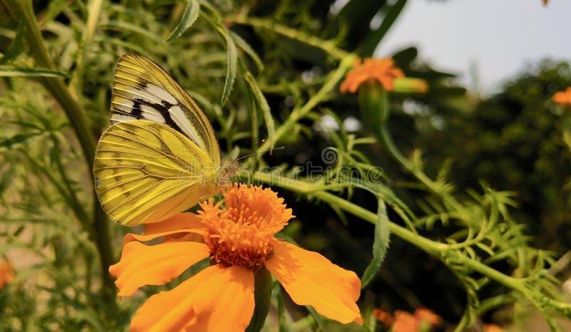 Mariposa de servicio imagen de archivo